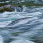 Beautiful horizontal image of sea green flowing water on McKenzie river in Central Oregon. Soft textured background ** Note: Shallow depth of field